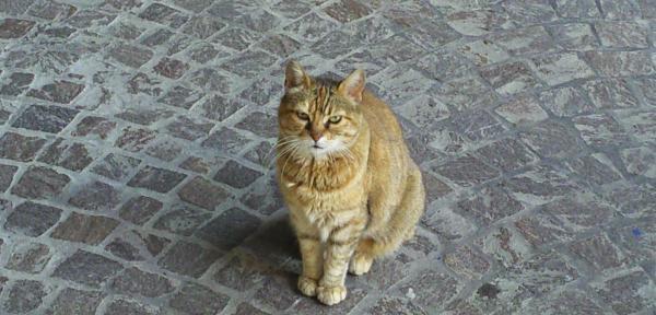 Gatto-rosso.jpg