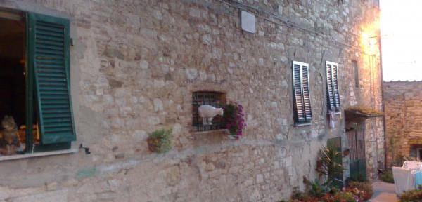 Gatti-alla-finestra.jpg